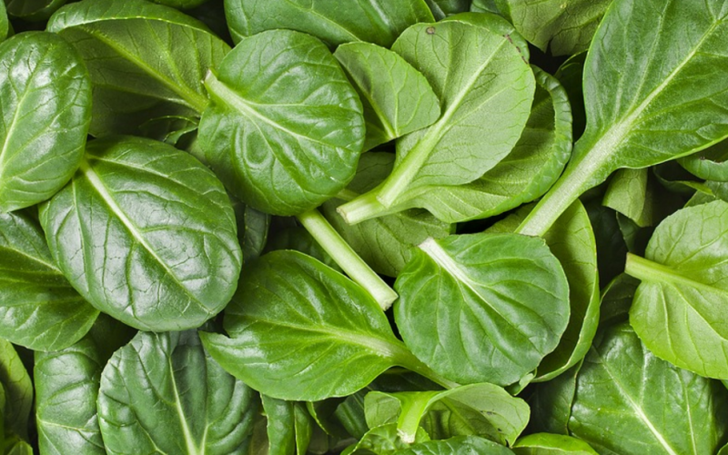 Spinach Turns Into Cardiac Machine