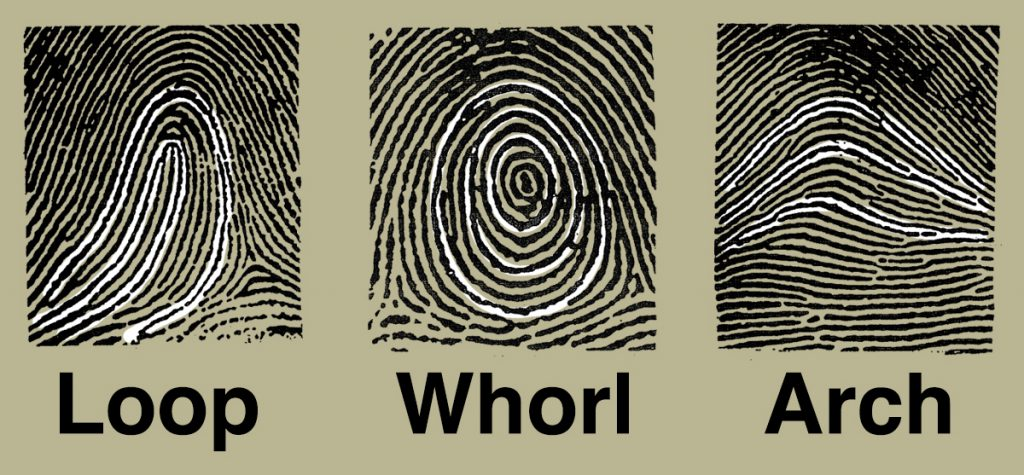 Loops, Whorls, and Arches - Fingerprints - Soma Technology, Inc.