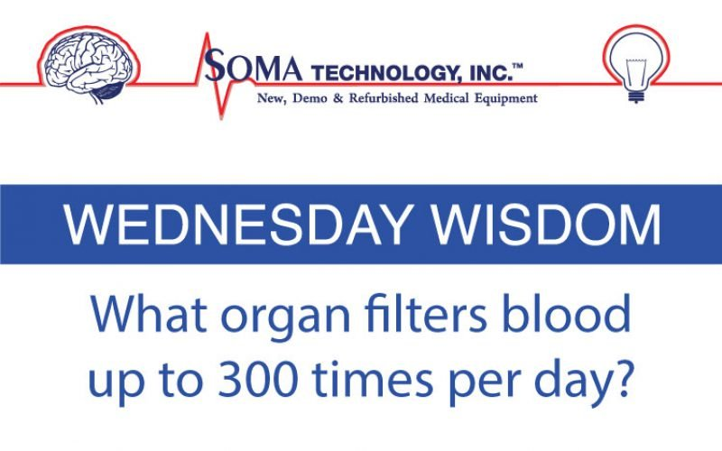 What Organ Filters Blood Up to 300 Times a Day?