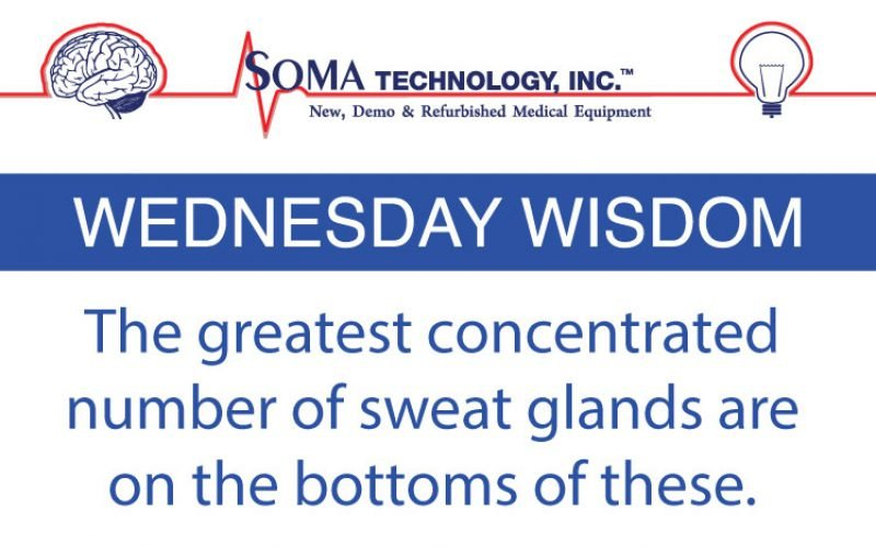 Where Are The Greatest Number of Sweat Glands?