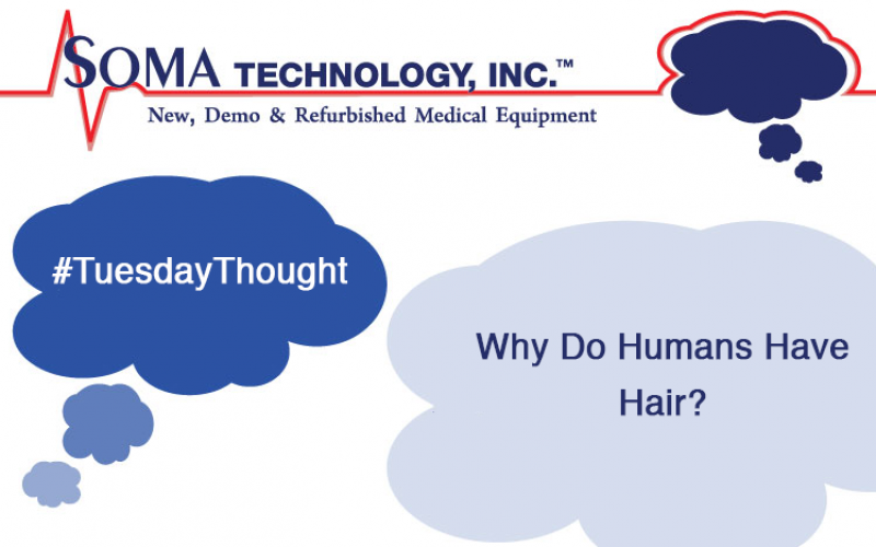 Tuesday Thoughts: Why Do Humans Have Hair?