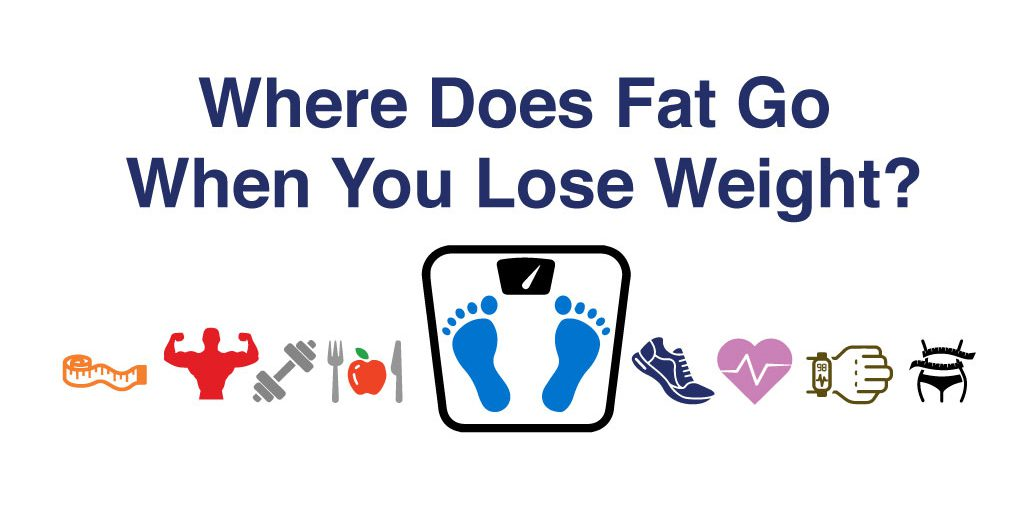 Where does fat go when you lose weight? - Soma Technology, Inc.