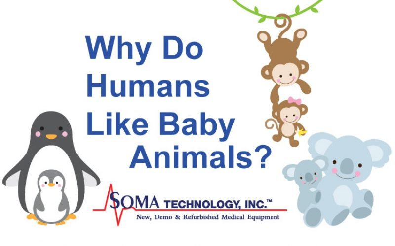 Why Do Humans Like Baby Animals?