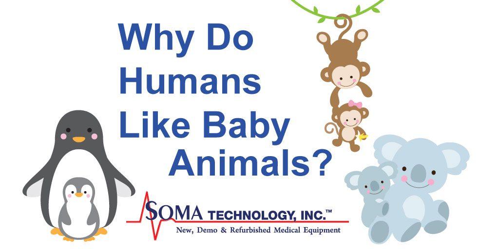 Why do human's like baby animals? - Soma Technology, Inc.
