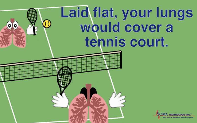 Fun Fact Friday: Your Lungs Can Cover a Tennis Court