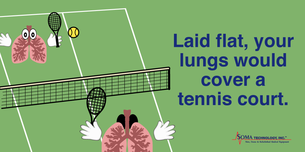 Laid Flat Your Lungs Would Cover a Tennis Court