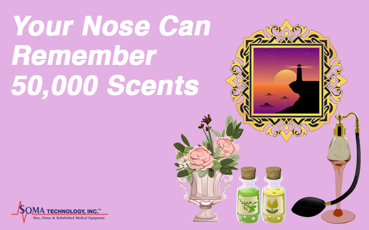 Your Nose Can Remember 50,000 Scents