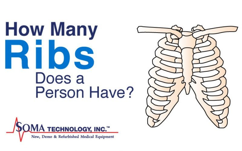 Wednesday Wisdom: How Many Ribs Are in the Body?