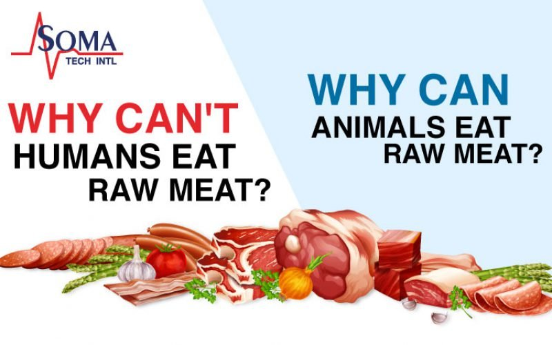 Why CAN'T humans eat raw meat? | Why CAN animals eat raw meat?