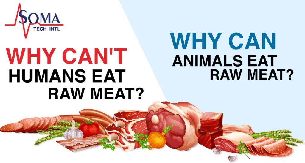 Why CAN'T humans eat raw meat? | Why CAN animals eat raw meat? | Soma Tech Intl