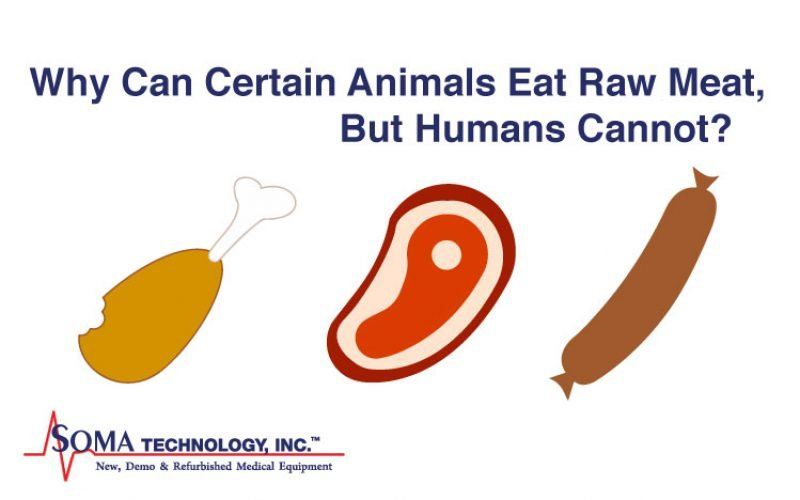 Why Can Certain Animals Eat Raw Meat, But Humans Cannot?