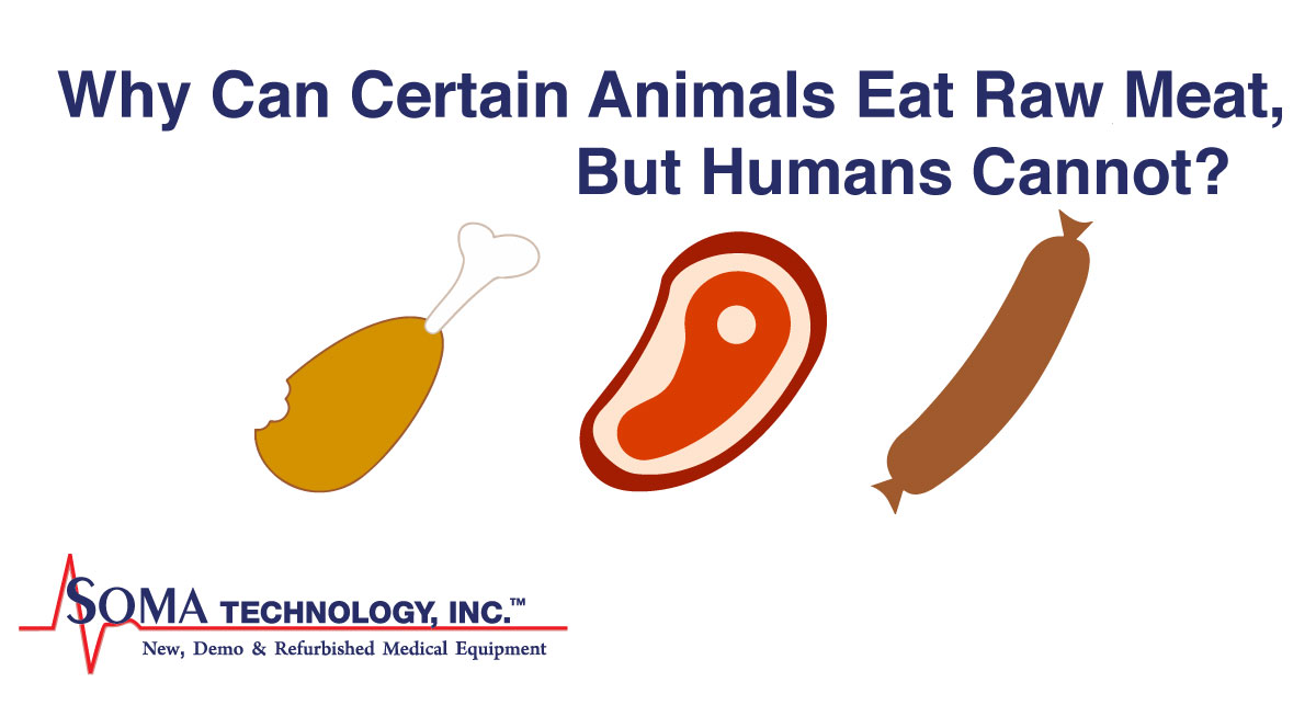 Why Can Certain Animals Eat Raw Meat But Humans Cannot