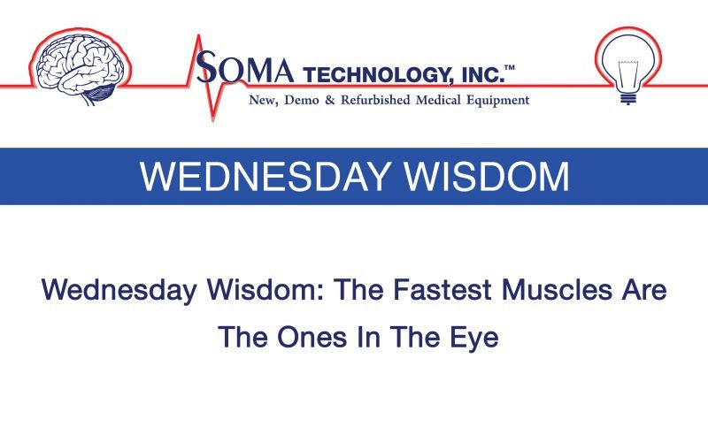 Wednesday Wisdom: The Fastest Muscles Are The Ones In The Eye
