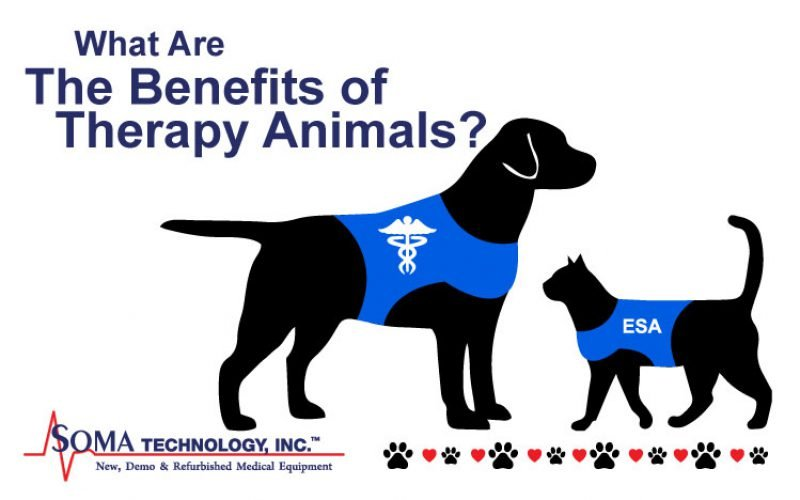 Tuesday Thoughts: What Are The Benefits of Therapy Animals?