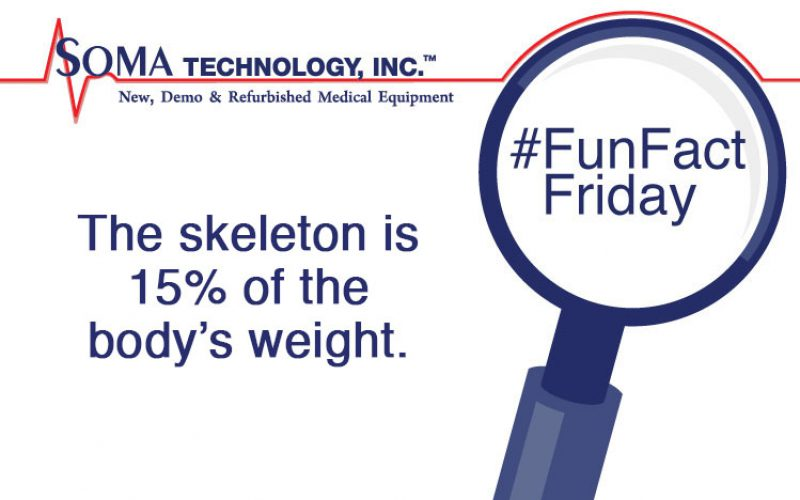 Friday Fact: Getting Spooky With Skeletons