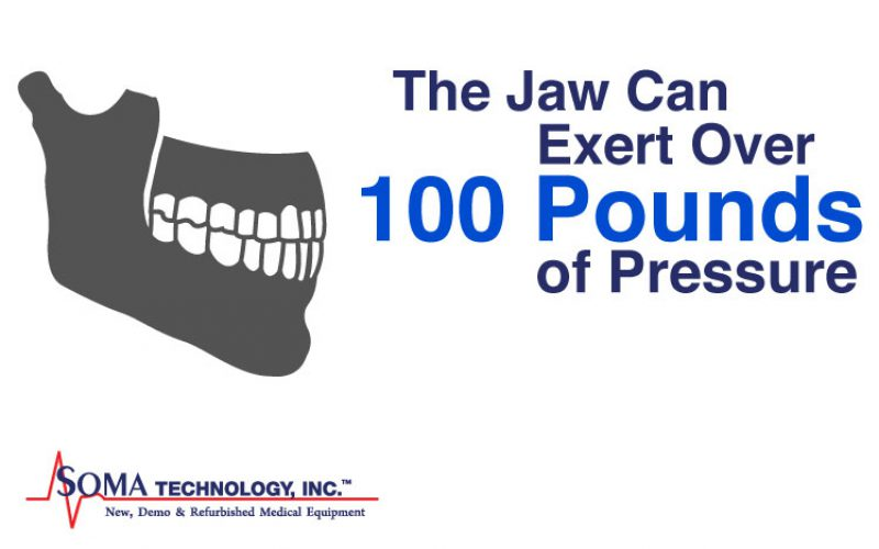Wednesday Wisdom: The Jaw Can Exert Over 100 Pounds of Pressure