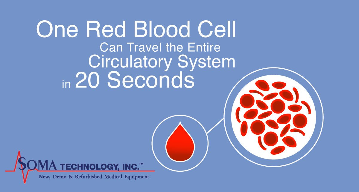 Fun Fact Friday Red Blood Cell