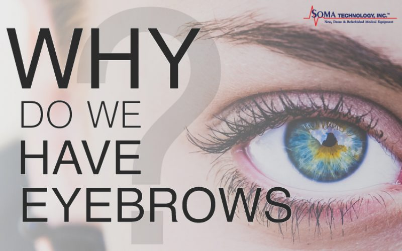 Why Do We Have Eyebrows? Tuesday Trivia!