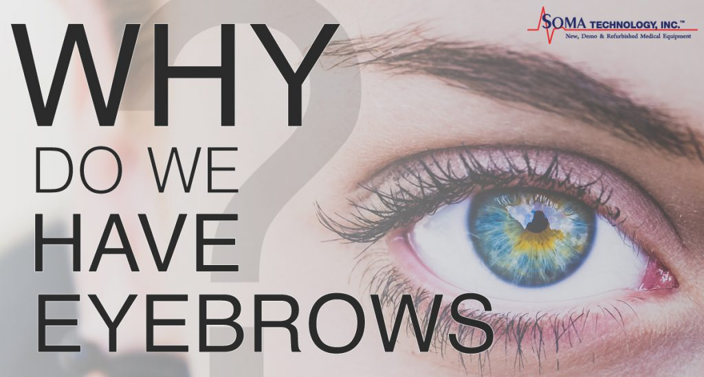 Why Do We Have Eyebrows