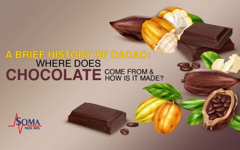A Brief History Of Cacao: Where Does Chocolate Come From And How Is It Made?