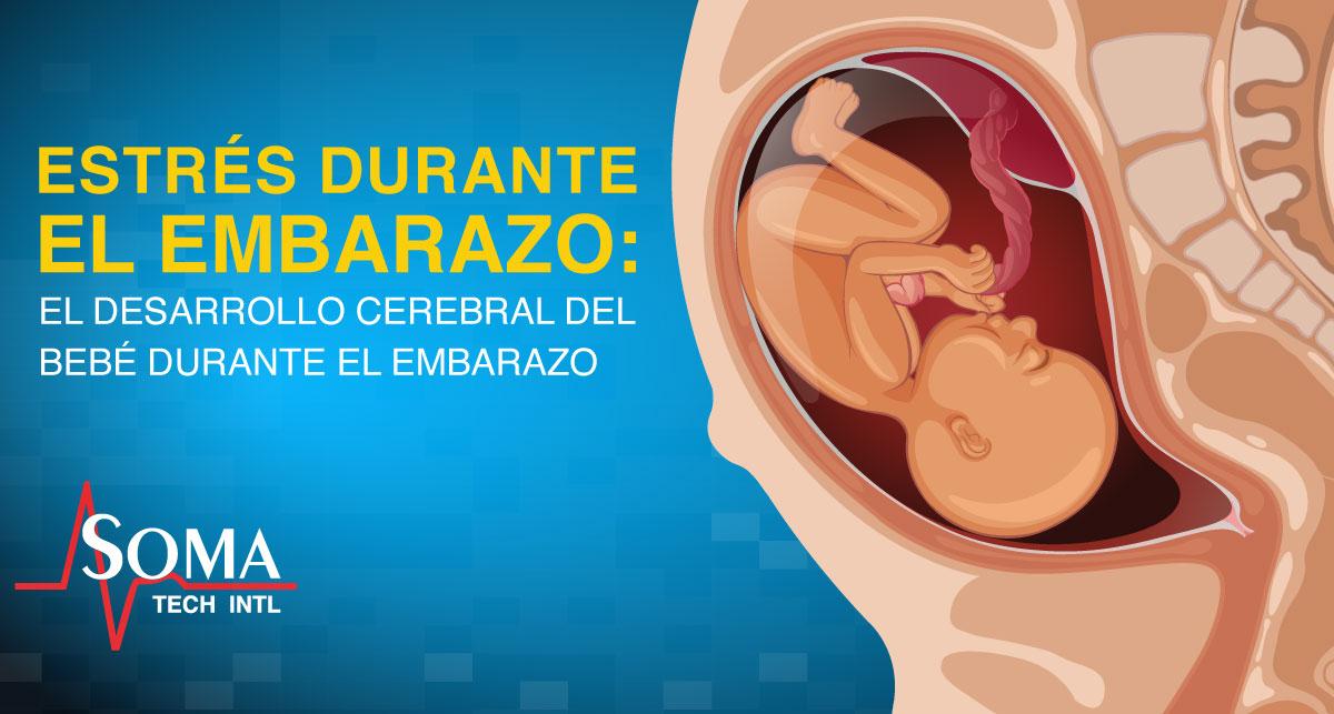 Estres Durante El Embarazo: El Desarrollo Cerebral Del Bebe Durante El Embarazo