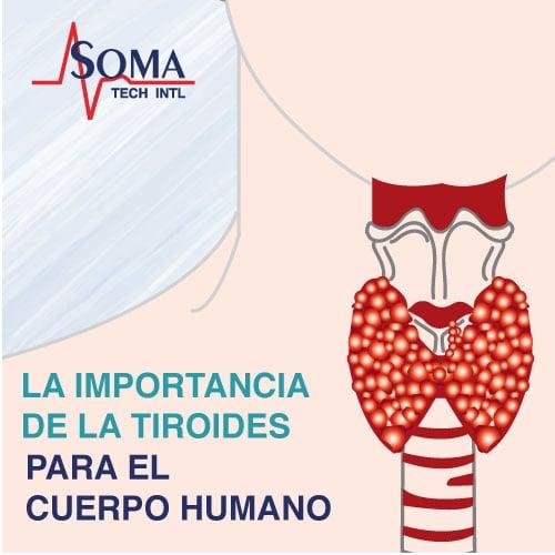 La Importancia De La Tiroides Para El Cuerpo Humano